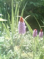 IMAG0043 (Ian Faz) Tags: flowers plants tress nessgardens