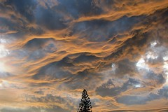 Cloud Power ! (Robert Lurie) Tags: christmas xmas sky cloud storm weather clouds southafrica capetown christmastree coldfront soe cloudformation xmastree darkclouds stormclouds rainclouds happychristmas firtree blueribbonwinner 10000views 500views50favourites stormapproaching robertlurie robertluriephotography magicalskies undulatusasperatus 2500views85favourites cloudsstormssunsetssunrises 4000views227favourites 5000views233favourites 10000views235favourites