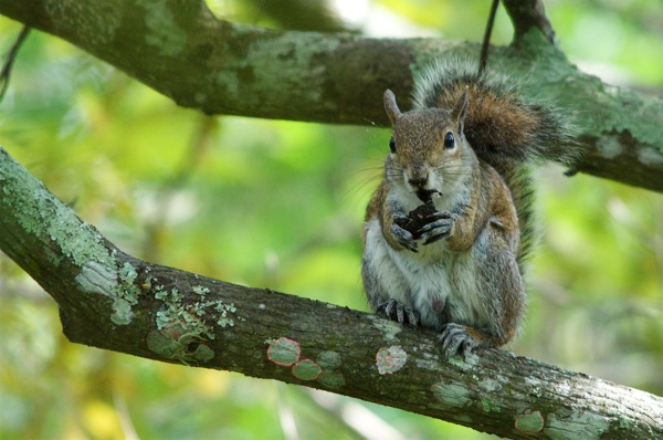squirrel_0042
