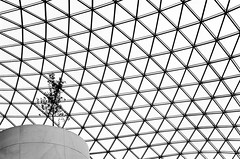 Alone Amongst A Sea Of Triangles (Philipp Klinger Photography) Tags: uk sea england bw white black tree london lines museum architecture triangles blackwhite nikon alone britain geometry united curves great kingdom gb lone british britishmuseum philipp sirnormanfoster klinger d700 sigma50mmf14 dcdead