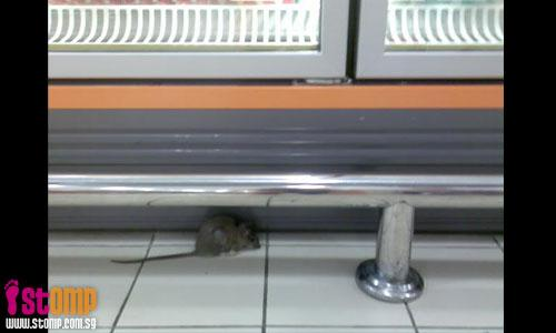 Mouse found at Vivocity's Giant. Where's the standard of hygiene?