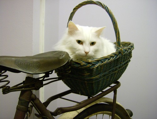 Cat basket