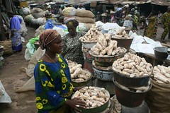 Women traders selling dried yam tubers