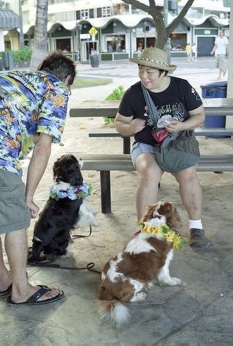 CB0906.037 Waikiki Beach M8.2sx35a#