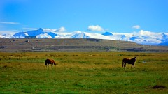 Horses & Mountains Photo