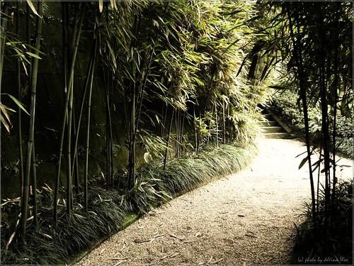 Bamboo's Rule