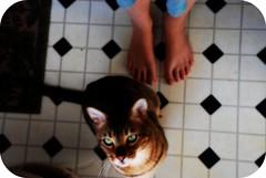 48/365 (Feeeonaah!) Tags: me cat floor greeneyes link 365 bengal handsomeboy mafeet