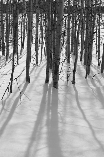 Aspen Shadow