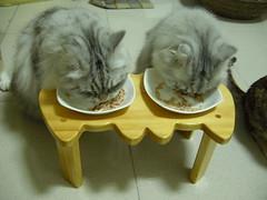 DSCN8741 (jacky elin) Tags: home cat play 貓 200902
