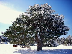 Snow # Explore (Gne ER | www.guneser.com) Tags: park new wood travel trees winter friends shadow sky food cloud white mountain snow mountains tree green nature beer pine forest table snowman nikon tour explore entertainment masa kar excursion piknik izmir milli am bira bulut aa mangal k glge elence orman doal blueribbonwinner arkada manisa doa spil arkadalar da kartopu thatsclassy theperfectphotographer thebestofday gnneniyisi rubyphotographer flickrlovers vanagram spilgezisi flickrloversspilgezisi spildamillipark spilmountainnationalpark