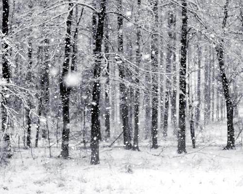 v snow 003 bw