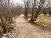 il sentiero che porta a Trebiciano