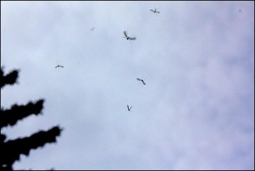 Die fliegen von Ihnen.