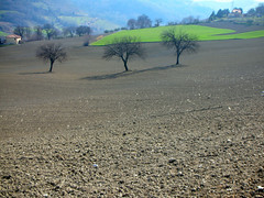 ...3... (rebranca46) Tags: trees friends panorama sun 3 verde green nature alberi landscape earth ombre campagna sole tre gmt romagna sadows supershot flickrsbest aplusphoto rebranca