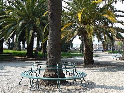 banc et palmiers.jpg