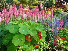 Bueatiful Garden At Doi Tung Chiang Rai Thailand / สวนดอกไม้ที่ดอยตุง