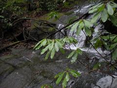 5 - Falls Along Old FS69A