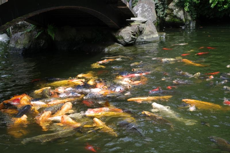 請問,魚要怎麼拍才會美呢?