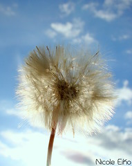 Little heart... (Nicole Eiko) Tags: sky flower branco azul heart flor corao wish ceu desejo h50 sonyh50 nicoleeiko