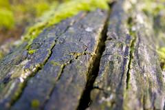 Texture: Rotting Tree (tallpomlin) Tags: macro canon sigma apo bark cracks rotten f28 1850 40d