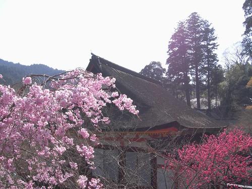 09-04-10【桜】@談山神社-13