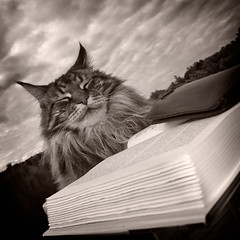 So many books, so little time. (GloryRays) Tags: cat reading book how droll thecatwhoturnedonandoff