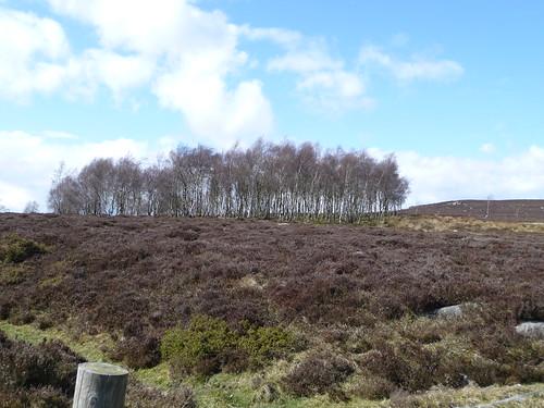 Sheffield to Castleton April 09 045