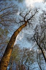 Tree majesty in Spring (photoriel) Tags: wood tree nature forest landscape switzerland spring limetree vaud cossonay supershot kartpostal colorphotoaward sepey worldtrekker vosplusbellesphotos landscapesshotinportraitformat