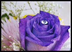 Purple (wat eva) Tags: life shadow flower macro art me nature closeup fun nikon mood colours purple memories personality lovers pearl impressions really simply unforgettable impression exotica unforgetable afi sense sensation instinct afiya d80 theunforgetablepictures