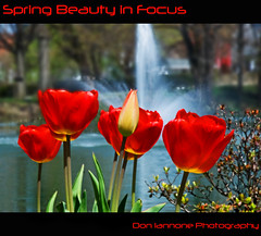 Spring Beauty in Focus (Don Iannone) Tags: ohio sunlight water sunshine spring pond flickr poem searchthebest cleveland explore waterfountain frontpage springtime redtulips lakeviewcemetery naturesbeauty imagepoetry tulipbud april2009 doniannone doniannonephotography metaphysicalphotography poemandapicture metaphysicalpoetry