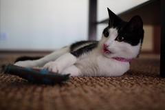 2009 05 03015 (alma the cat) Tags: cat canon eos alma kitty kot gatz thebiggestgroupwithonlycats catnipaddicts