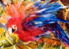 Art: Watercolour: ...colourful Ara Macao (Nadia Minic) Tags: bird interestingness aquarelle parrot watercolour colourful luxembourg oiseau farbig papagei vogel color perroquet aquarell fauvista cffaa cfaa miasbest nadiaminic nadiaart