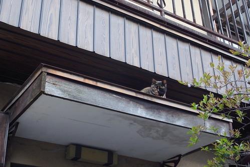 Today's Cat@20090505