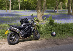 is ed fell off (John D F) Tags: field bluebells speed woodland olympus triumph triple decapitation headcase e510 johnfielding