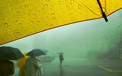 Strano, vagare nella nebbia. (anton3ll0) Tags: people yellow fog umbrella drops persone giallo nebbia ombrello hermanhesse homersiliad travelsofhomerodyssey