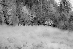 Backyard Dreams (HeathMcConnell) Tags: trees grass forest landscape ir outdoors photography backyard header infrared oakridge watermarked 1x15