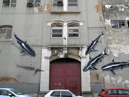 tubarões e carros