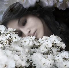 153 365     sleep (.bella.) Tags: flowers sleeping summer portrait self death petals blossoms 365days