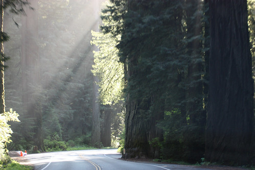 Driving the Redwood Highway