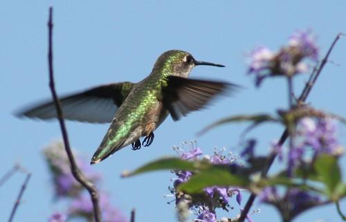Hummingbirds at Quintana Neotropical Bird Sanctuary. Photo: Kyle McCreary of As the mind Wanders