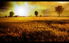 Corn field 1920x1200 (felipecastilloparra) Tags: de escritorio fondos