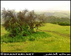 Darbat (Shanfari.net) Tags: flowers plants nature al natural ericsson sony greenery cave oman salalah  sultanate dhofar  khareef  haq  diplopoda     taqah    governate  madeinat  darbat taiq c905  raythut