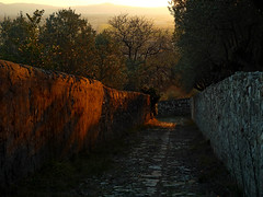 l'ultimo sole tra i sassi - the last sun between the stones (sharkoman) Tags: sunset tramonto stones pietre mura toscana sentiero viottolo olivi lastrico sharkoman