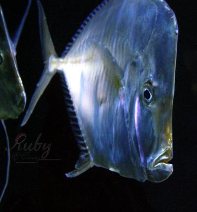 Monaco_aquarium_fish_04