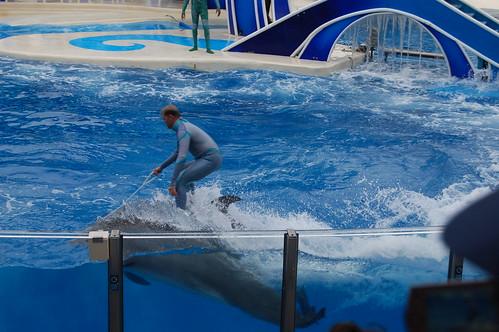 Disney Dolphin Family Rooms