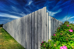 Fences,Roses and Sky - Torreso, Denmark (MrBall) Tags: flowers roses sky grass fence denmark europe hdr scandanavia 3exp canoneosdigitalrebelxti torreso 11mm22mm