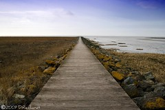 Long way. (D.Reichardt) Tags: nature germany way landscape europe long nordsee norddeutschland aplusphoto panoramafotográfico
