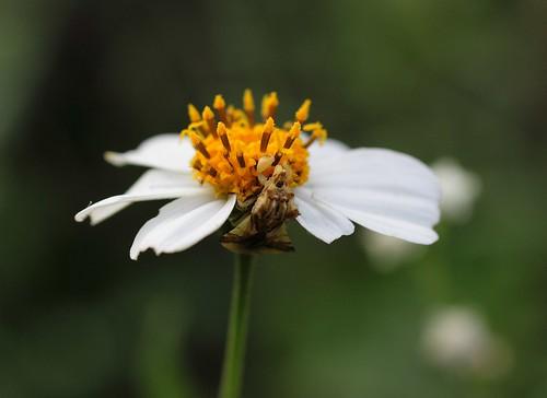 Flor con bicho