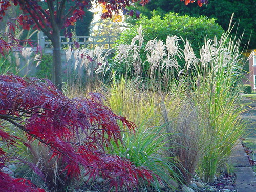 Gardens and Grasses Image 15