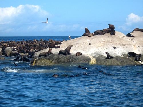 seal's island